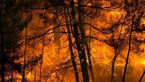 Incendie Villeneuve Les Avignon : incendie de for ts des chercheurs d 39 avignon prouvent que ~ Dailycaller-alerts.com Idées de Décoration