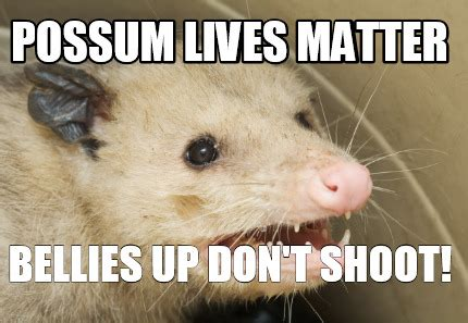 Possum Memes - meme creator possum lives matter bellies up don t shoot