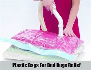 8 home remedies for bed bugs natural treatments cure With bed bugs plastic bags how long