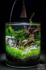 Süßwasserfische Fürs Aquarium : die besten 20 aquascape aquarium ideen auf pinterest ~ Lizthompson.info Haus und Dekorationen