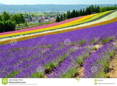 Colorful Flower Field Hokkaido Japan Royalty Free Stock