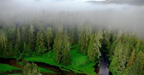 nations  enhanced  forest