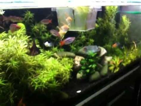 200 litre tropical fish tank aquarium