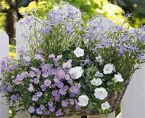 Blumenkübel Bepflanzen Sommer : zum nachpflanzen balkonkasten mit g nsebl mchen petunie und sternblume living at home ~ Eleganceandgraceweddings.com Haus und Dekorationen