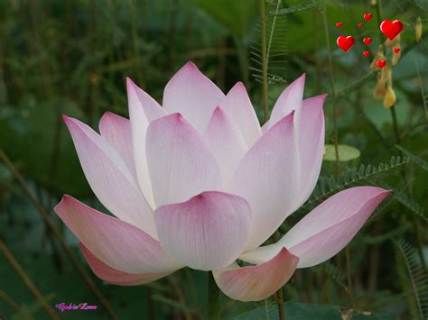 Of The Gods Flowers god wallpapers