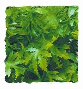 Terrarium Plante Deco : plante cannabis d co pour terrarium 46cm ~ Dode.kayakingforconservation.com Idées de Décoration