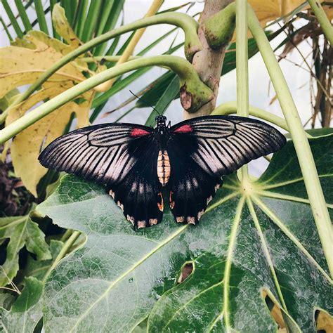 Farfalle In Casa by La Casa Delle Farfalle A Roma Un Luogo Dove Scattare Foto