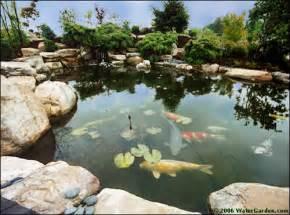 Koi Pond Water Garden
