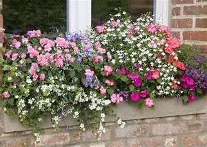 Jardiniere Chez Jardiland : 17 meilleures id es propos de jardini res fleuries sur ~ Premium-room.com Idées de Décoration