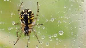 Spinnen Fernhalten Wohnung : mit dieser pflanze bek mpfen sie spinnen in ihrer wohnung bauen wohnen ~ Whattoseeinmadrid.com Haus und Dekorationen