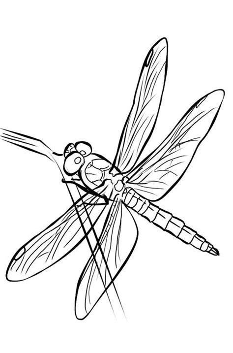 Dragonfly Colouring Pages Free - Dragonfly cartoon