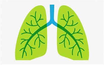 Lung Lungs Transparent Clipart Clipartkey