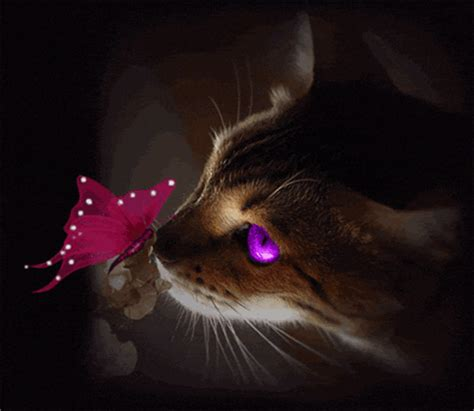 Kitten With Butterfly  Images And Messages