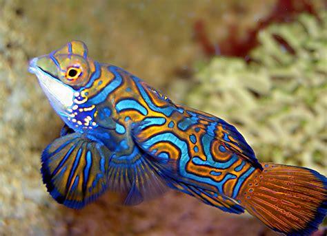 aquarium du limousin aquarium de limoges