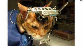 cat test debate cat testing hlntv