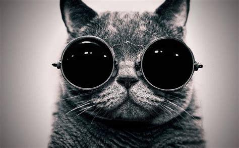 Morpheus Cat Meme - cat morpheus blank template imgflip