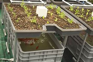 How To Grow With Aquaponics In 5 Simple Steps