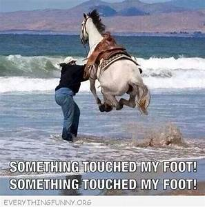 funny captions horse jumping in ocean something touched my ...