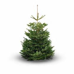 where to buy real christmas trees in and around glasgow the list