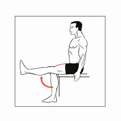 Extension Seated Leg Exercise Exercises Chair Quads