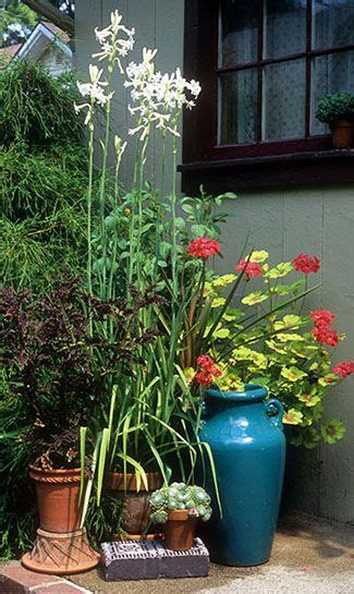 1000 images about garden bulbs on gardens in