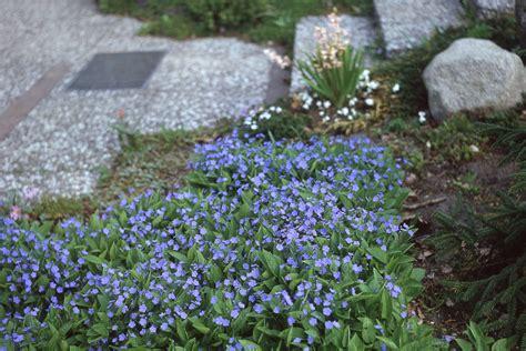 blumen für schattige plätze blumen f 252 r schattige pl 228 tze pflanzen f r schattige pl tze pflanzen f r schattige pl tze in