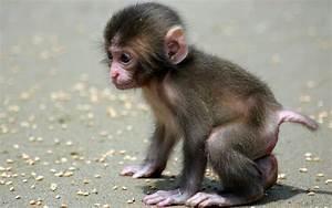 New HD Wallpaper of Cute Baby Monkey - Download Hd New HD ...