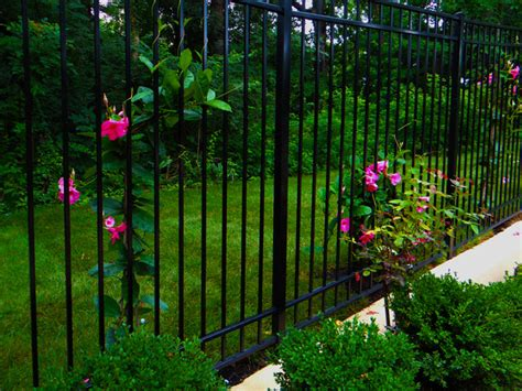 plants that climb fences iron fence with climbing plants traditional landscape dc metro by cbell ferrara