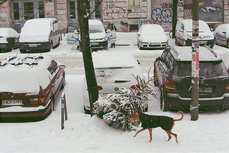 berlin the city of homeless christmas trees 187 iheartberlin de