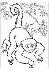 Coloring Pages Monkeys Monkey Easy Spider Printable Colouring Colour Children Adult Panama Getdrawings Getcolorings Justcolor sketch template