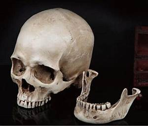 17 Best Images About Skull On Pinterest