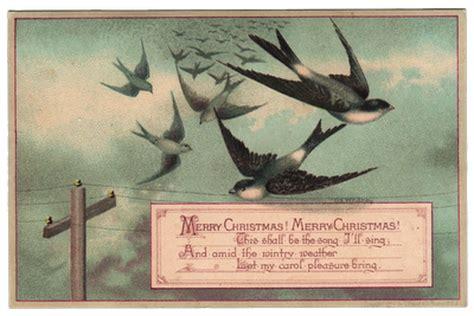 beautiful bird postcard swallows  graphics fairy