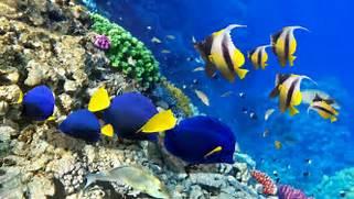 coral-reefs-algae-fish-corals-nature-oceans-underwater-reefs-high      Coral Reef Wallpaper 1920x1080