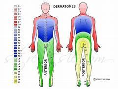 view original image   ...Dermatomes Netter
