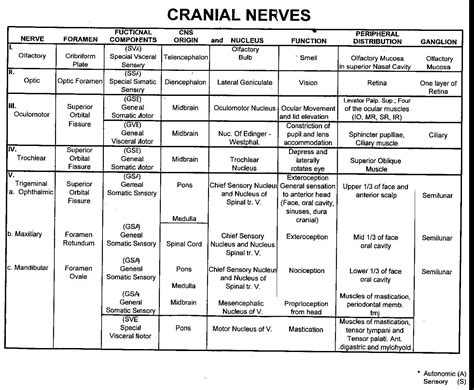 cranial nerve functions pictures to pin on