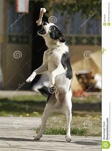 Dog Catch Bone Stock Image  Image Of Faithful  Friend