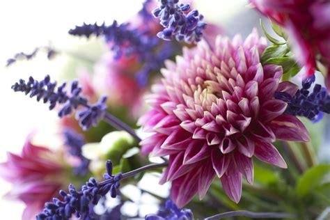 fresh cut flower tips    fresh flowers