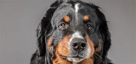 natural relief   dogs urinary tract infections