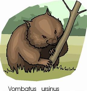 Common Wombat Free Animal Clipart | Free Microsoft Clipart