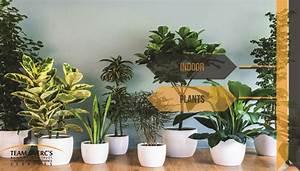 Indoor Plants Importance And Indoor Plants Names