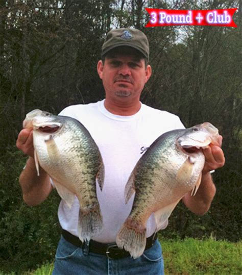Photo Gallery at Simply Crappie