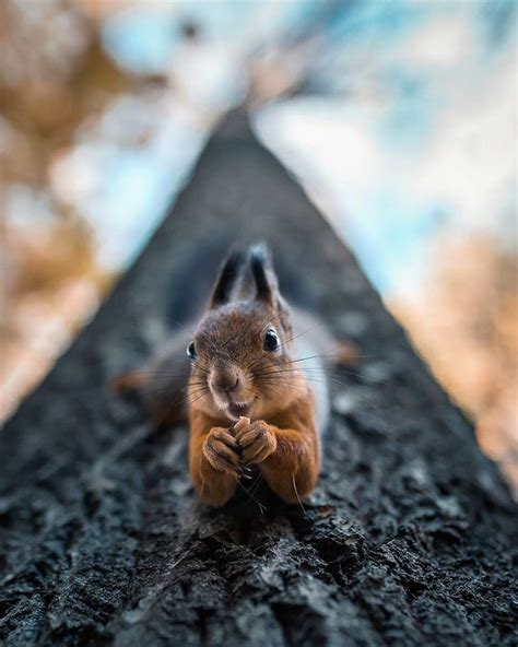 photographer shoots finnish forest animals  theyre