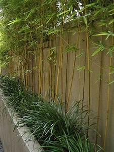 les 25 meilleures idees concernant amenagement paysager With idee amenagement jardin paysager 1 haie de bambous une idee de plus en plus seduisante