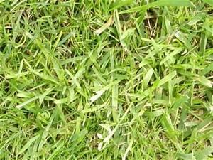 Unkraut Im Rasen Bestimmen : unkraut im rasen pflanzenbestimmung pflanzensuche green24 hilfe pflege bilder ~ Frokenaadalensverden.com Haus und Dekorationen