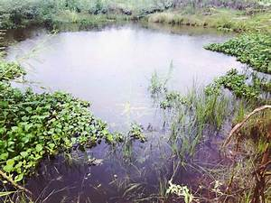 Ponds - Drought Proof TX