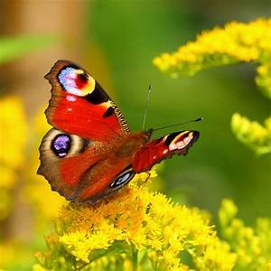 What Makes A Butterfly's Wings So Colorful? » Science ABC