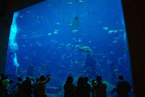 chambre aquarium hotel atlantis dubai chambre aquarium wroc awski
