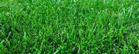 Sir Walter Buffalo Lawn Turf Suppliers, Soft Leaf Durable