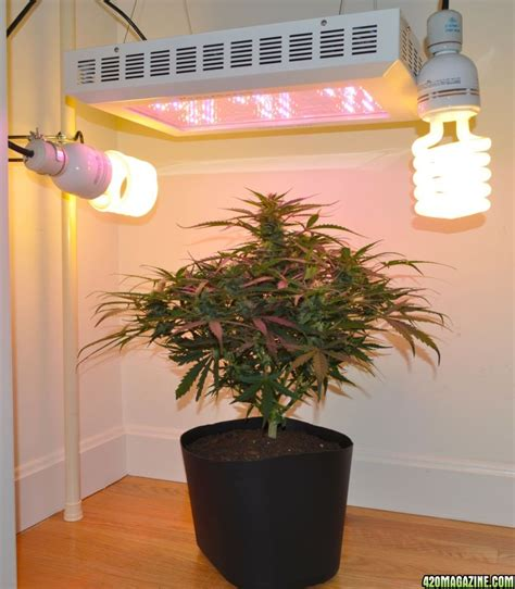 small fluorescent grow light fixture lighting design ideas