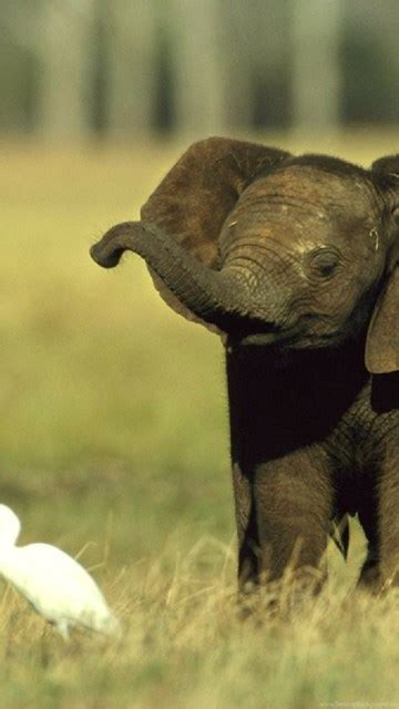 cute baby elephant hd wallpapers daily backgrounds  hd